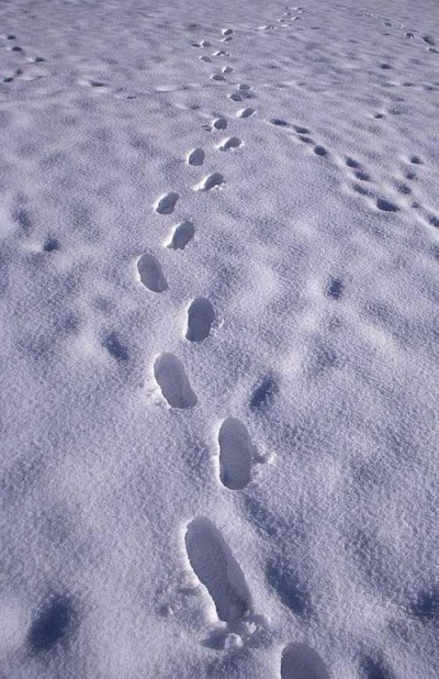 Snow Prints and Free Determinism